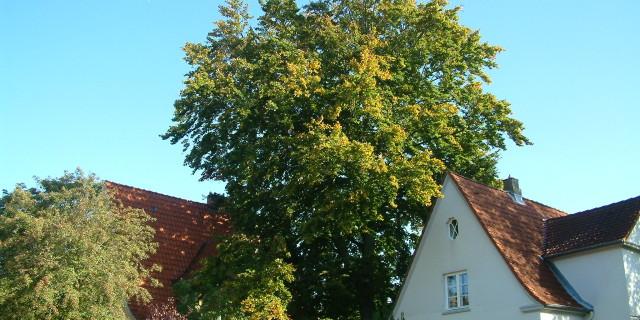 Baumerhaltung Baumschutz Baumpflege urban