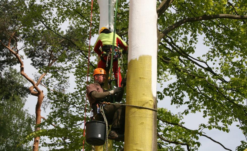 Baumerhaltung Weißanstrich an Buche mit Arborflex Hamburg 2