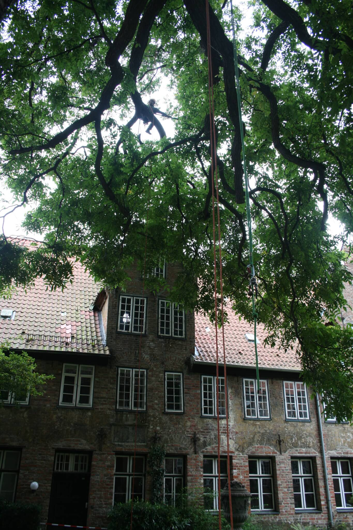 Baumpflege ist expertensache unsere einzugsgebiete baumpflege und baumf llung in norddeutschland - Gartenbau kiel ...