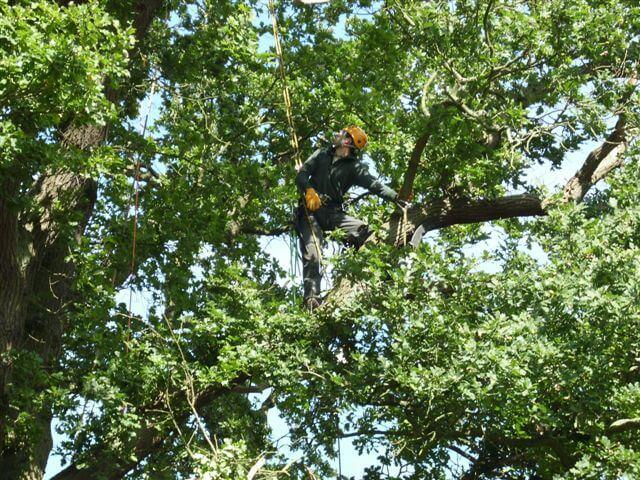 Baumpflege für den Kreis Kiel