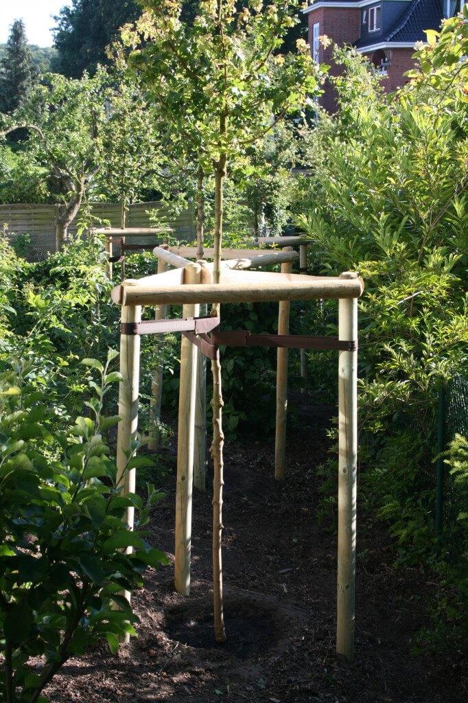nachpflanzung l beck baumpflege und baumf llung in norddeutschland. Black Bedroom Furniture Sets. Home Design Ideas