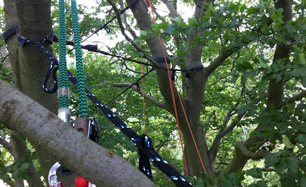 Niedenhoff Baumpflege Kronensicherung an Buche 1
