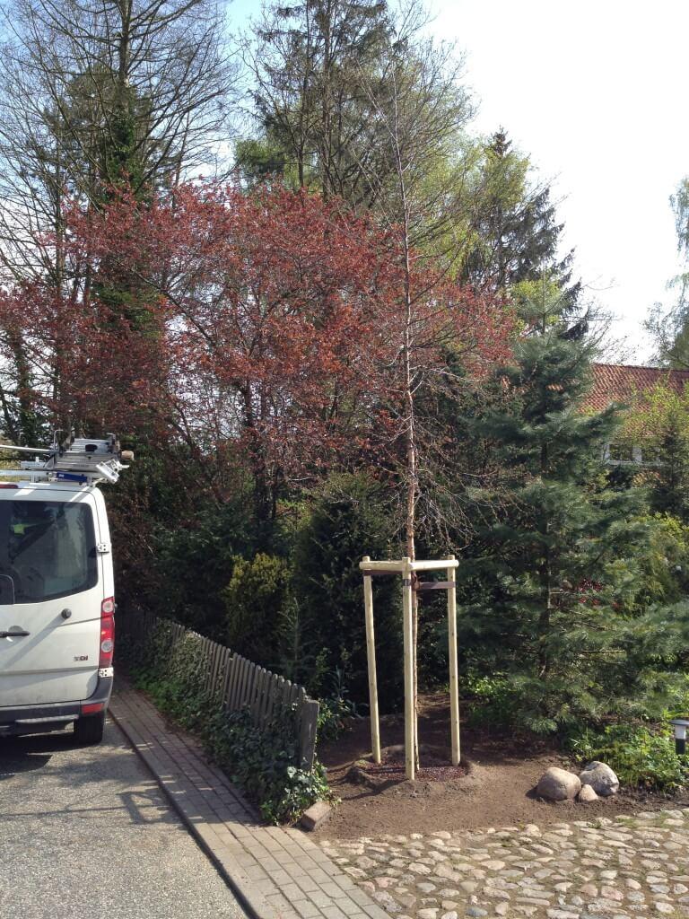 pflanzung bad schwartau baumpflege und baumf llung in norddeutschland. Black Bedroom Furniture Sets. Home Design Ideas