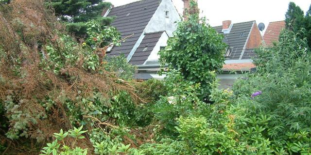Sturmschaden Beseitigung