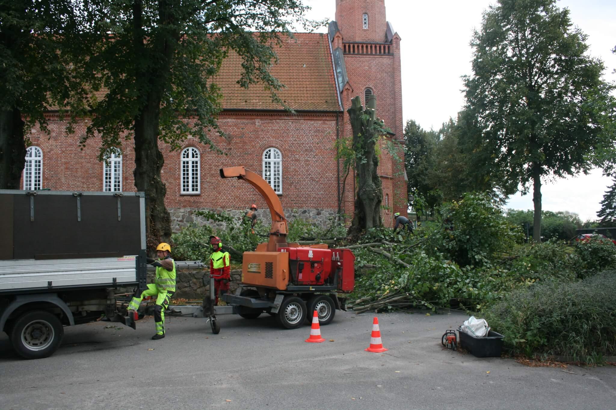 Klettergurt Für Baumfällung : Professionelles baumfällen vom fachmann